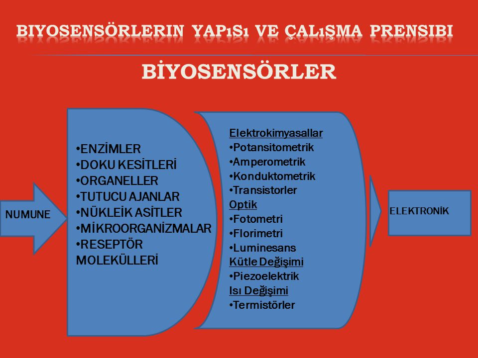 Biyosensörlerin Yapısı ve Çalışma Prensibi