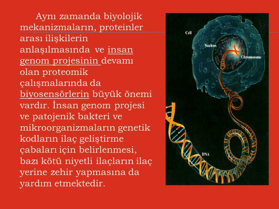 Aynı zamanda biyolojik mekanizmaların, proteinler arası ilişkilerin anlaşılmasında ve insan genom projesinin devamı olan proteomik çalışmalarında da biyosensörlerin büyük önemi vardır.