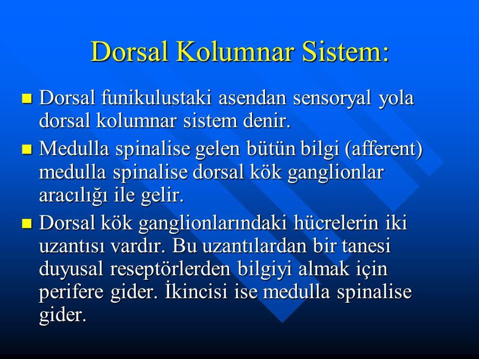 Dorsal Kolumnar Sistem: