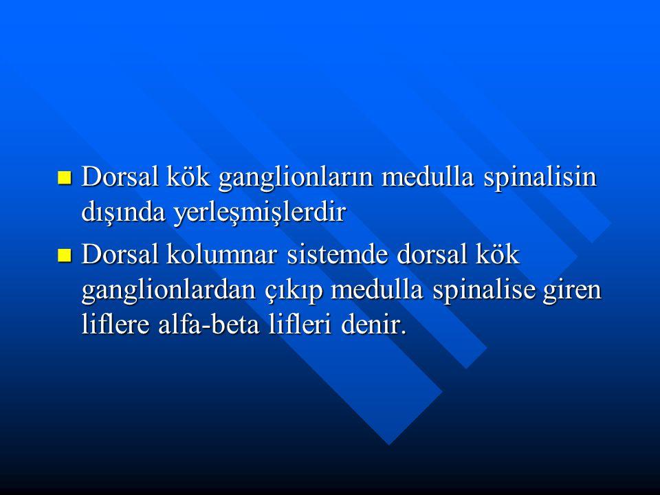Dorsal kök ganglionların medulla spinalisin dışında yerleşmişlerdir