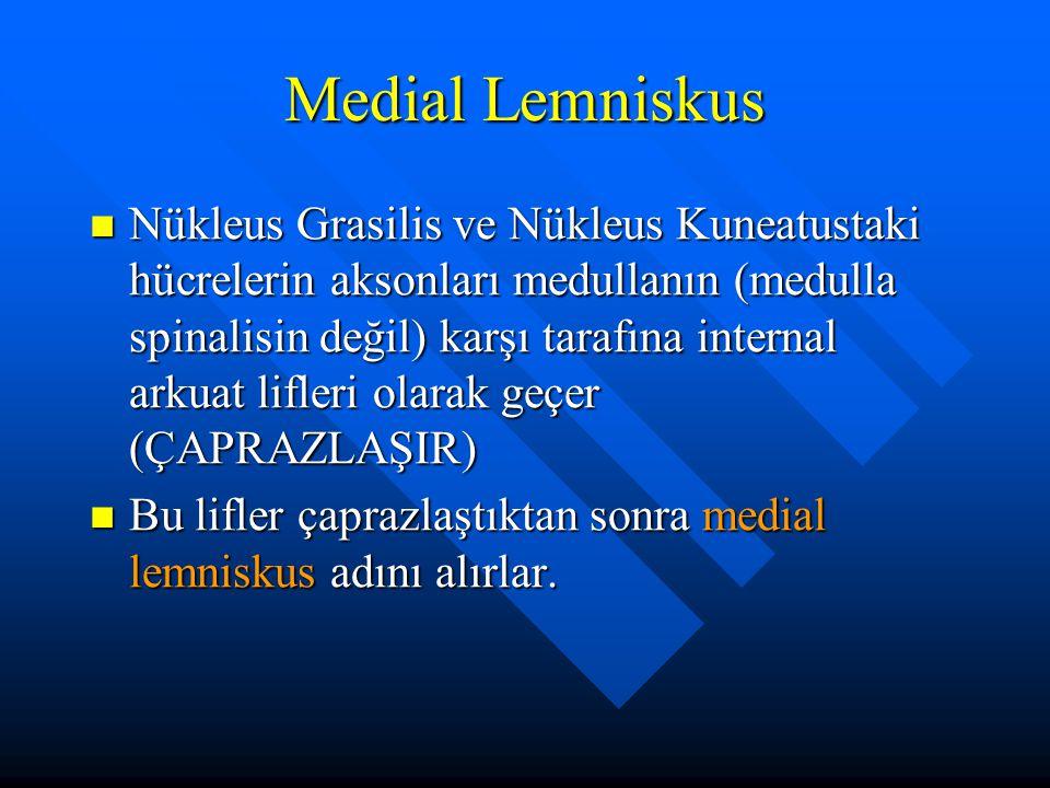 Medial Lemniskus