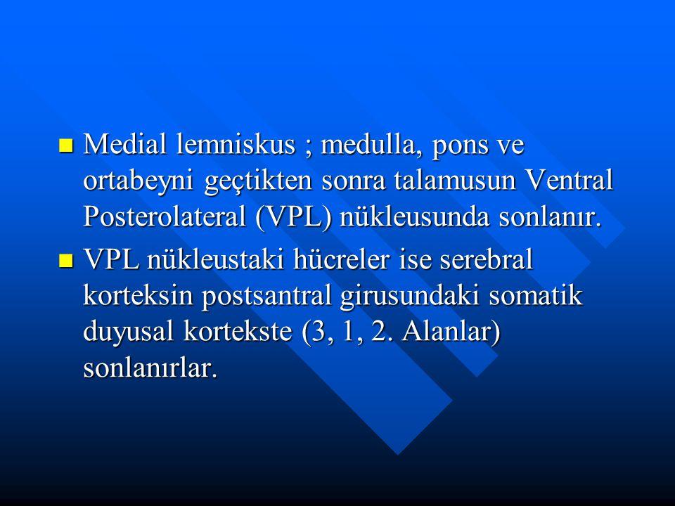 Medial lemniskus ; medulla, pons ve ortabeyni geçtikten sonra talamusun Ventral Posterolateral (VPL) nükleusunda sonlanır.