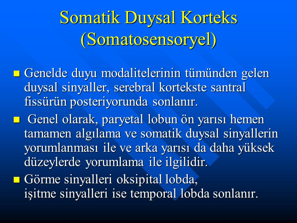Somatik Duysal Korteks (Somatosensoryel)