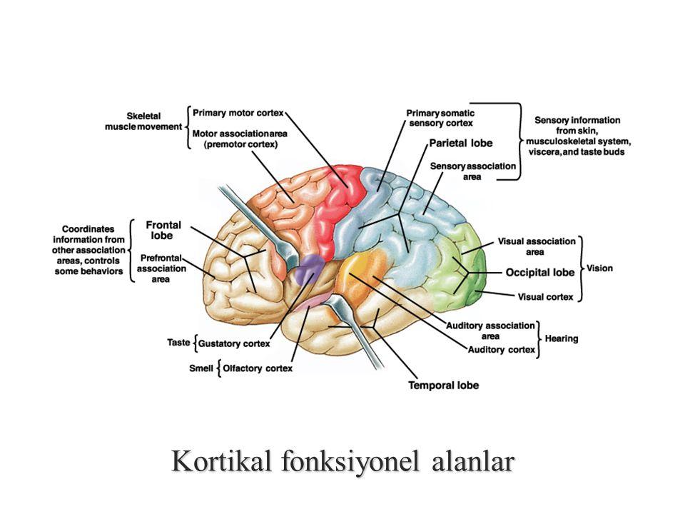 Kortikal fonksiyonel alanlar