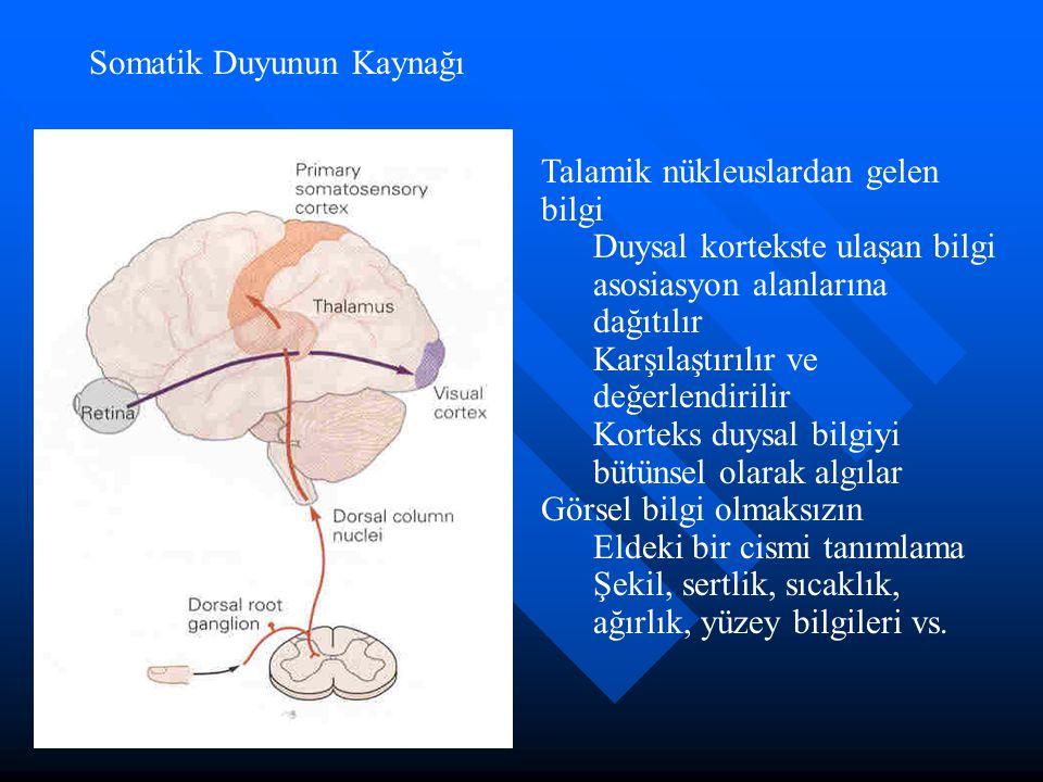 Somatik Duyunun Kaynağı