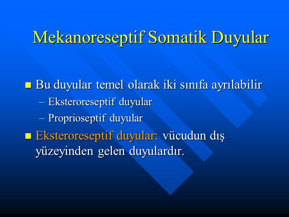 Mekanoreseptif Somatik Duyular