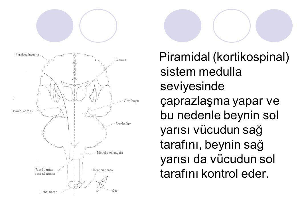 Piramidal (kortikospinal) sistem medulla seviyesinde çaprazlaşma yapar ve bu nedenle beynin sol yarısı vücudun sağ tarafını, beynin sağ yarısı da vücudun sol tarafını kontrol eder.