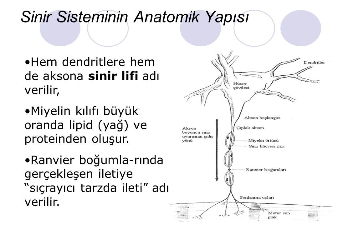 Sinir Sisteminin Anatomik Yapısı