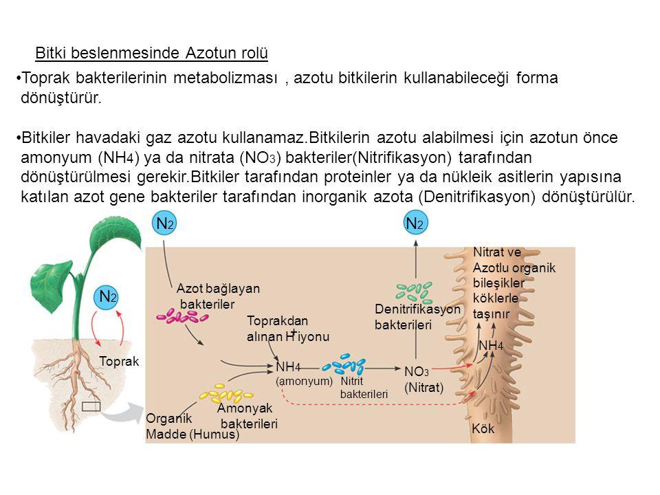 Bitki beslenmesinde Azotun rolü