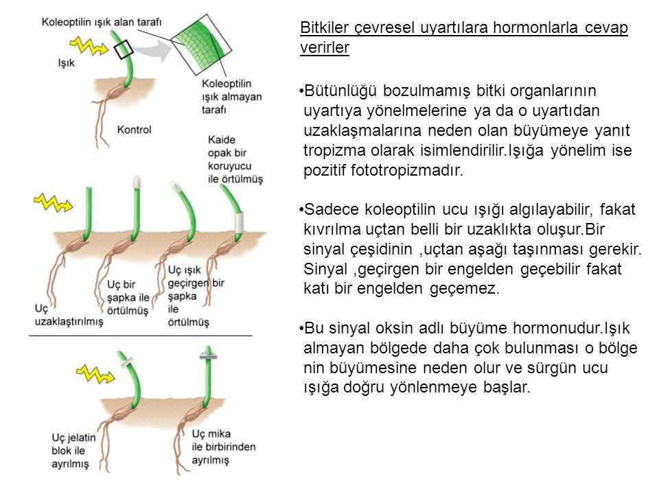 Bitkiler çevresel uyartılara hormonlarla cevap