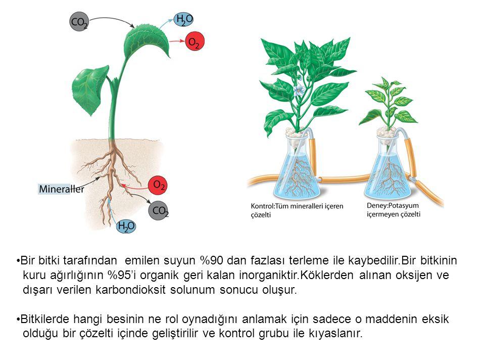 Bir bitki tarafından emilen suyun %90 dan fazlası terleme ile kaybedilir.Bir bitkinin