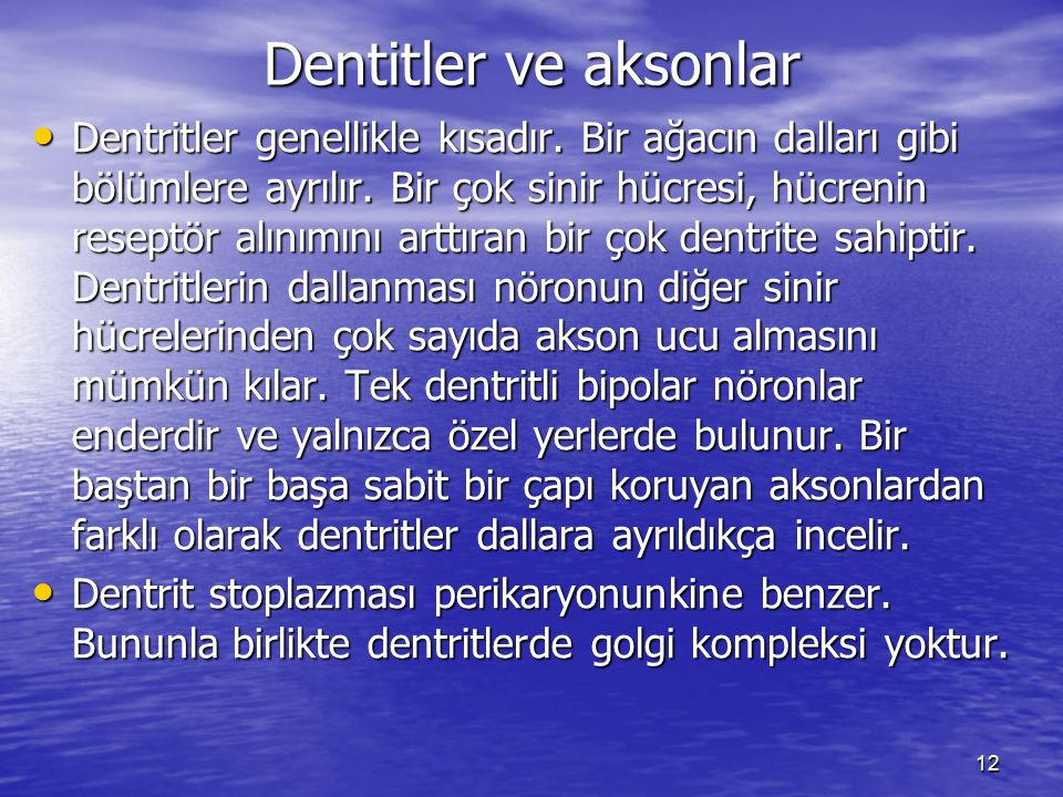 Dentitler ve aksonlar
