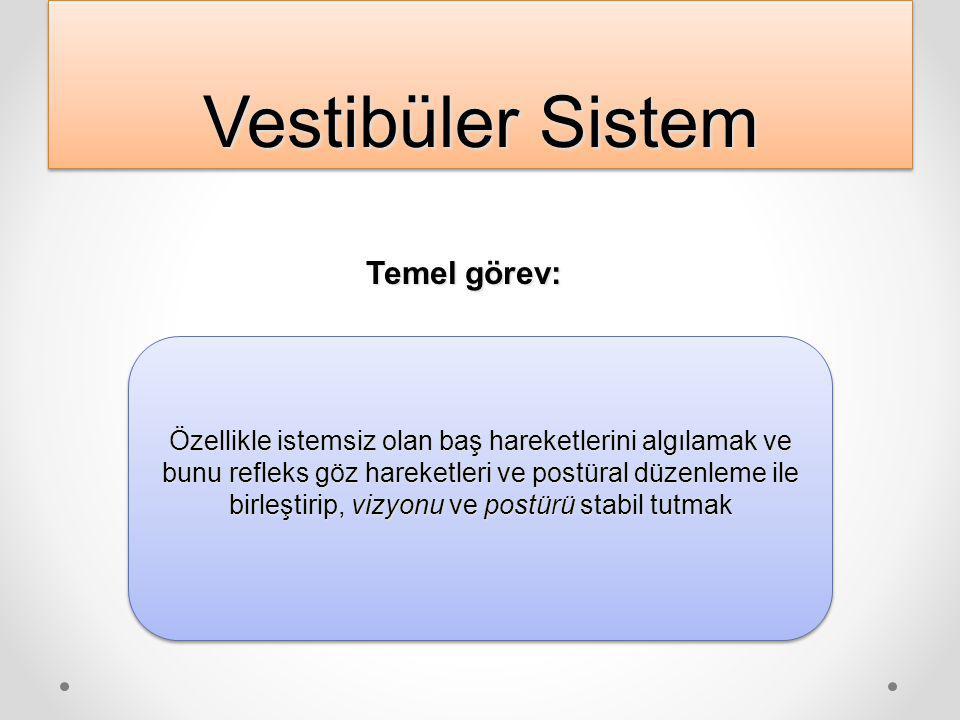 Vestibüler Sistem Temel görev: