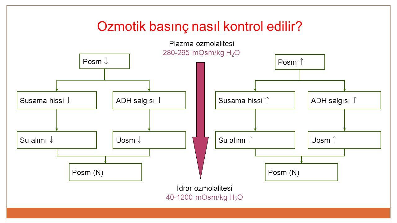 Ozmotik basınç nasıl kontrol edilir