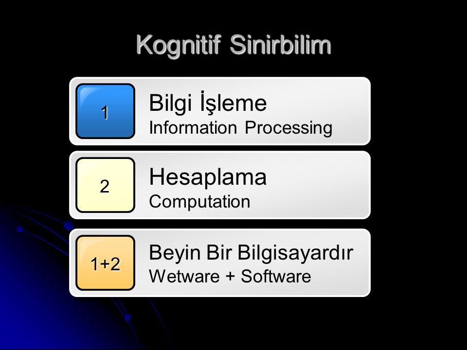 Kognitif Sinirbilim Bilgi İşleme Information Processing