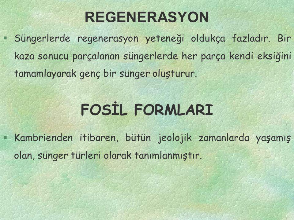 REGENERASYON FOSİL FORMLARI