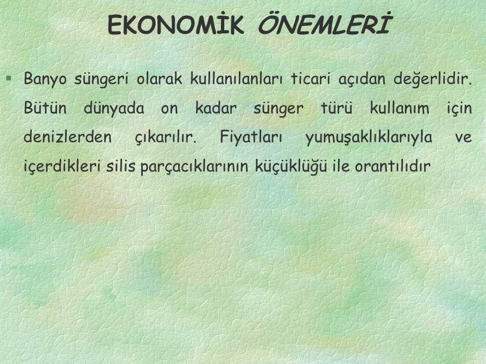 EKONOMİK ÖNEMLERİ