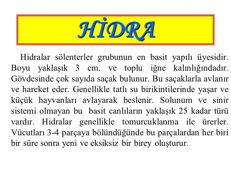 HİDRA