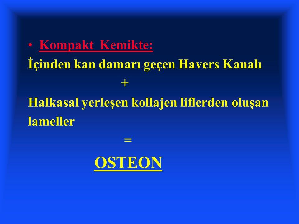 OSTEON Kompakt Kemikte: İçinden kan damarı geçen Havers Kanalı +