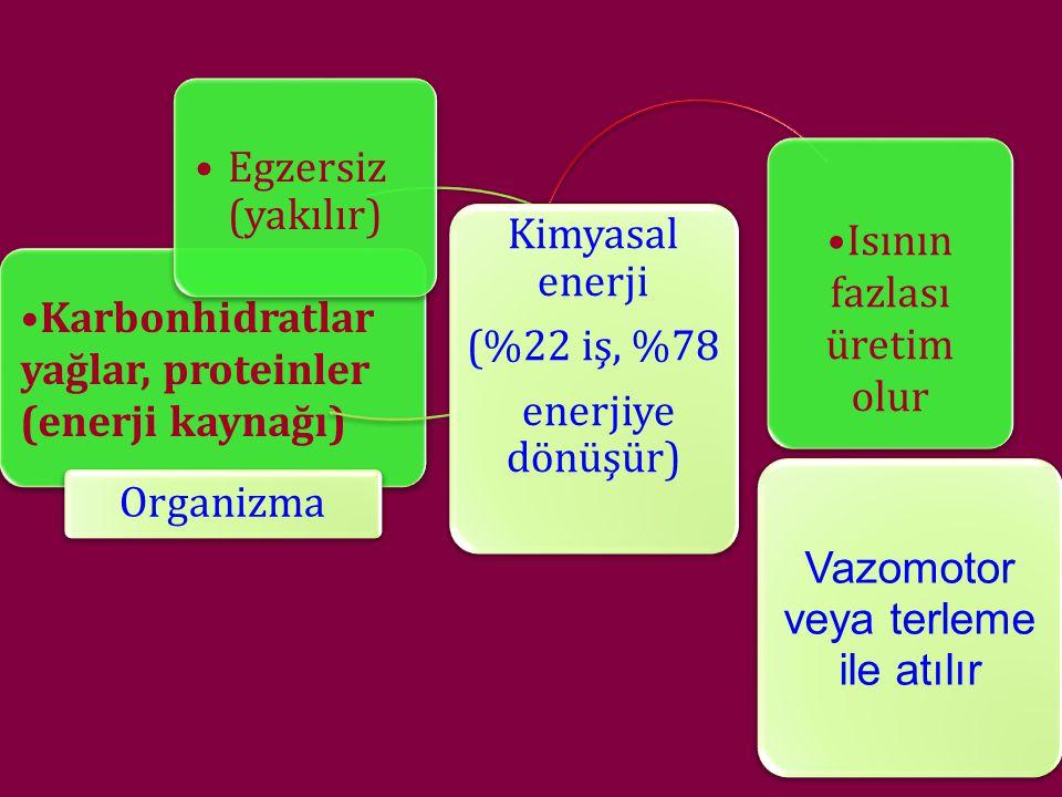Karbonhidratlar yağlar, proteinler (enerji kaynağı)