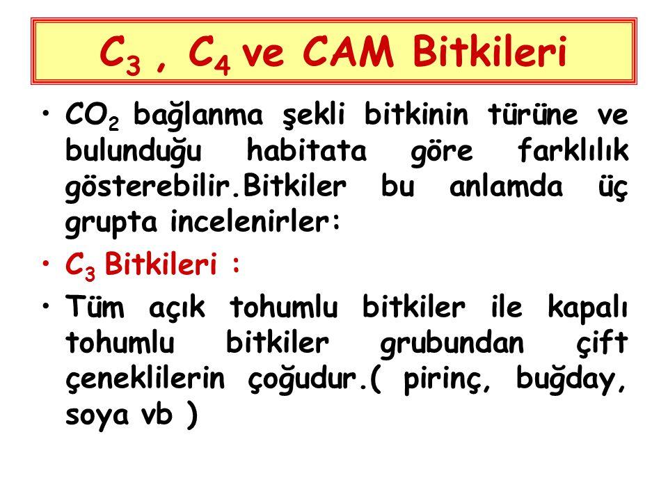 C3 , C4 ve CAM Bitkileri