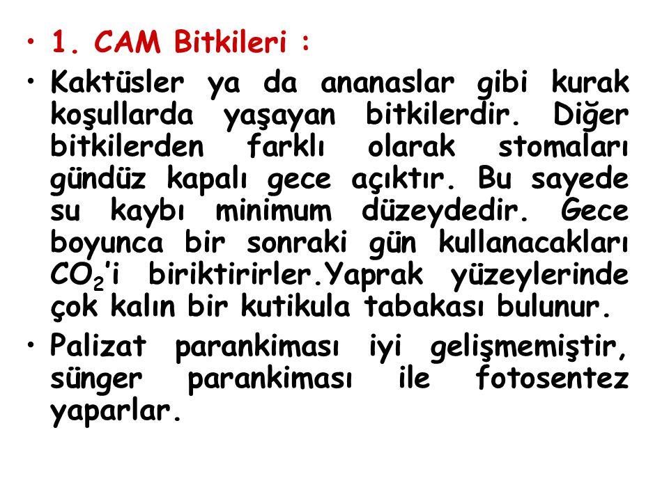 1. CAM Bitkileri :