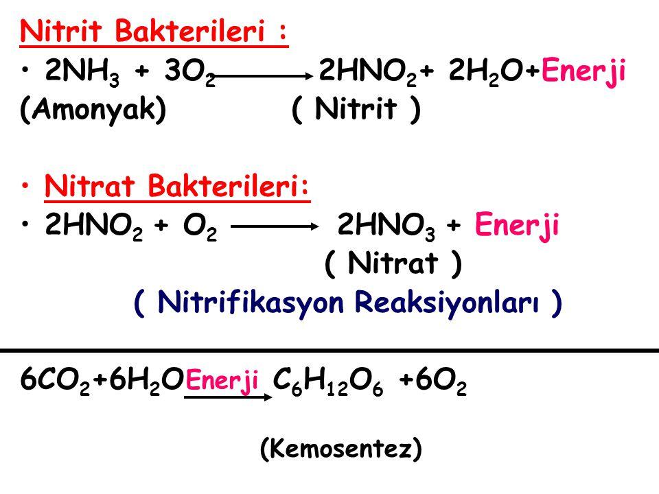 ( Nitrifikasyon Reaksiyonları ) 6CO2+6H2O C6H12O6 +6O2