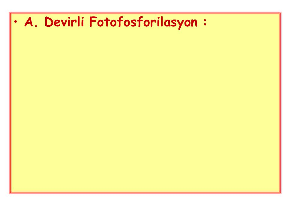 A. Devirli Fotofosforilasyon :