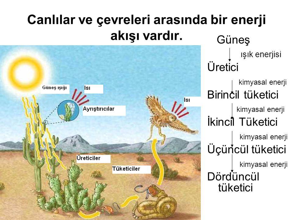Canlılar ve çevreleri arasında bir enerji akışı vardır.