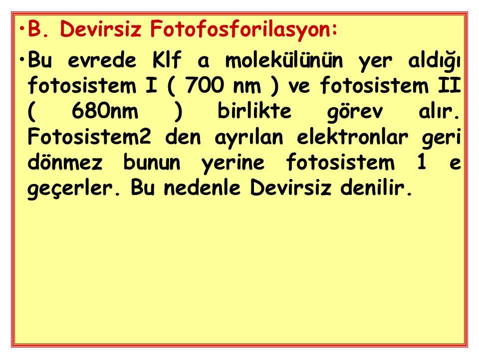 B. Devirsiz Fotofosforilasyon: