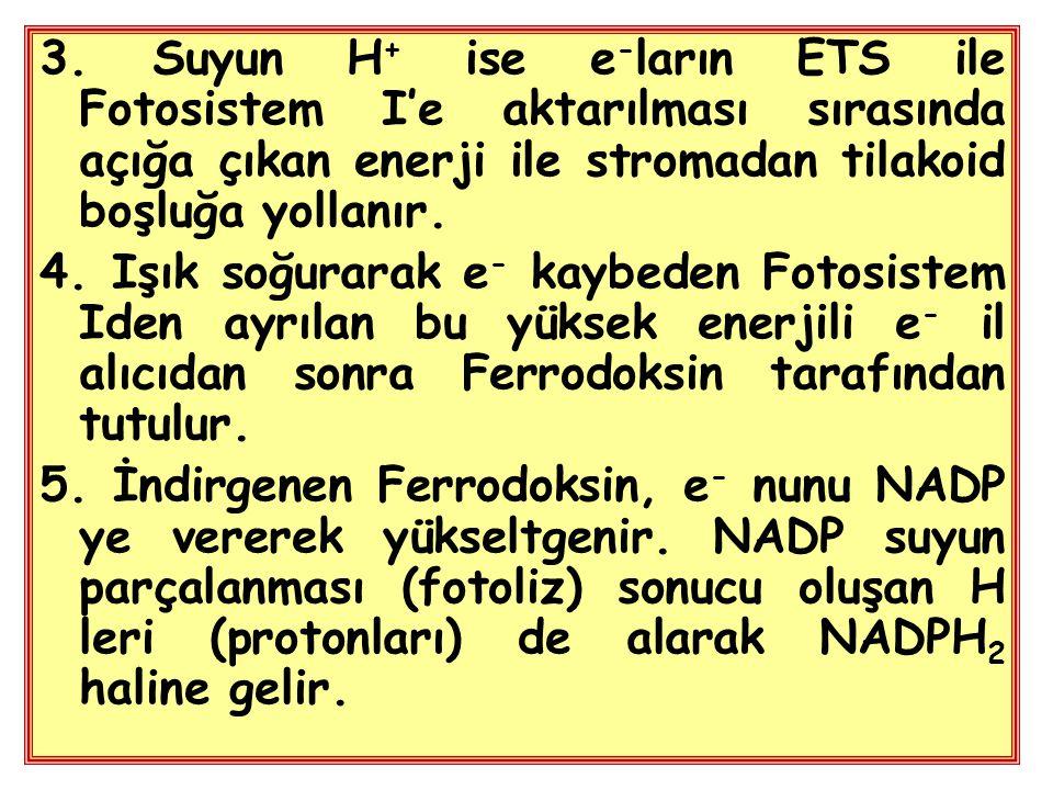 3. Suyun H+ ise e-ların ETS ile Fotosistem I'e aktarılması sırasında açığa çıkan enerji ile stromadan tilakoid boşluğa yollanır.