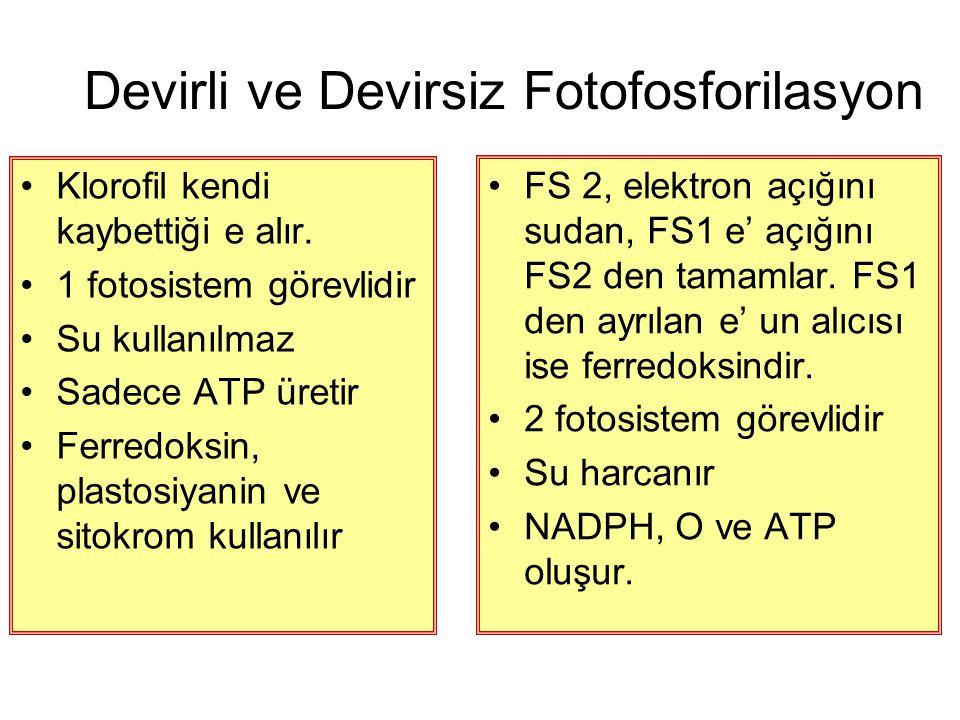 Devirli ve Devirsiz Fotofosforilasyon