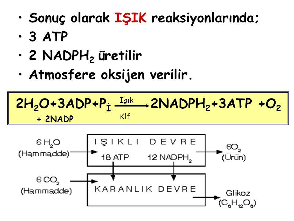Sonuç olarak IŞIK reaksiyonlarında; 3 ATP 2 NADPH2 üretilir