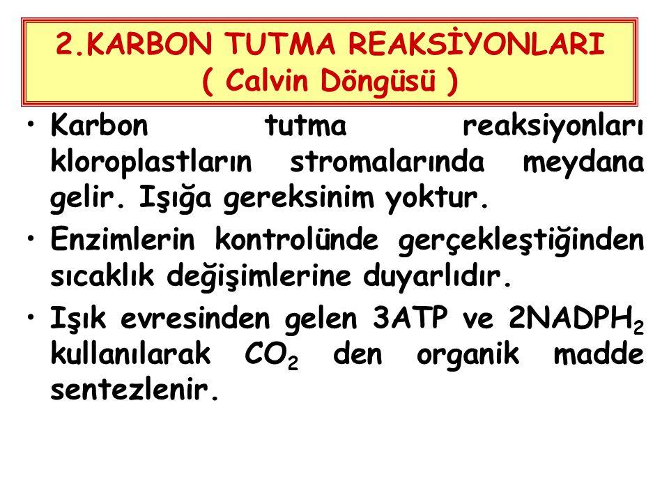 2.KARBON TUTMA REAKSİYONLARI ( Calvin Döngüsü )