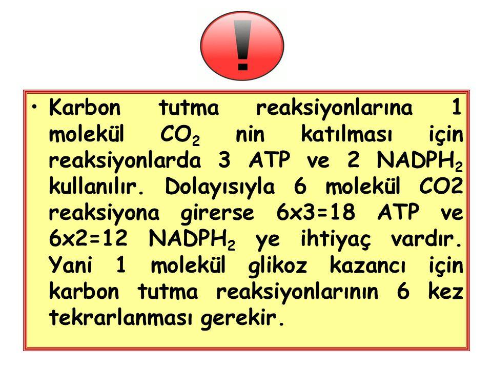 Karbon tutma reaksiyonlarına 1 molekül CO2 nin katılması için reaksiyonlarda 3 ATP ve 2 NADPH2 kullanılır.