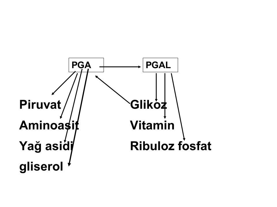 Yağ asidi Ribuloz fosfat gliserol