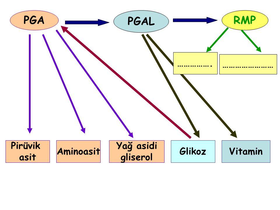 PGA PGAL RMP ……………. …………………… Pirüvik asit Aminoasit Yağ asidi gliserol