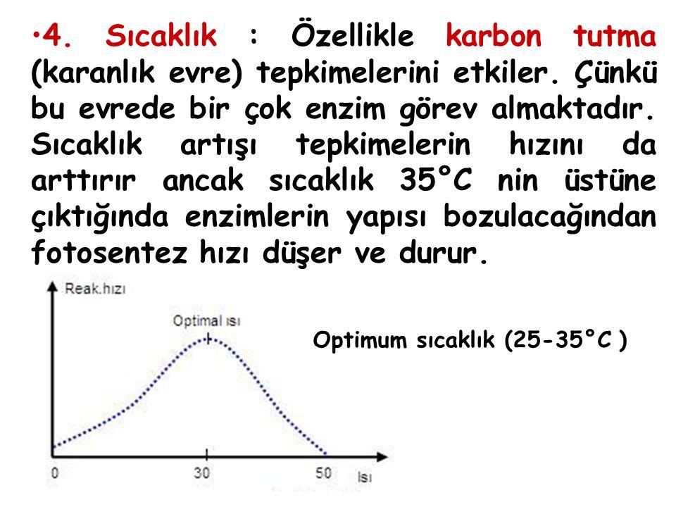 4. Sıcaklık : Özellikle karbon tutma (karanlık evre) tepkimelerini etkiler. Çünkü bu evrede bir çok enzim görev almaktadır. Sıcaklık artışı tepkimelerin hızını da arttırır ancak sıcaklık 35°C nin üstüne çıktığında enzimlerin yapısı bozulacağından fotosentez hızı düşer ve durur.