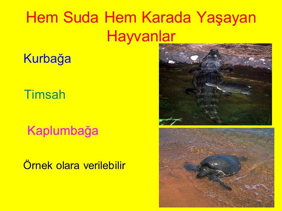 Hem Suda Hem Karada Yaşayan Hayvanlar