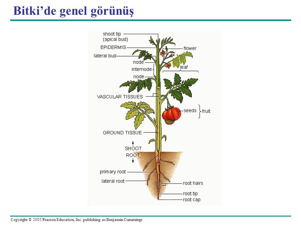 Bitki'de genel görünüş