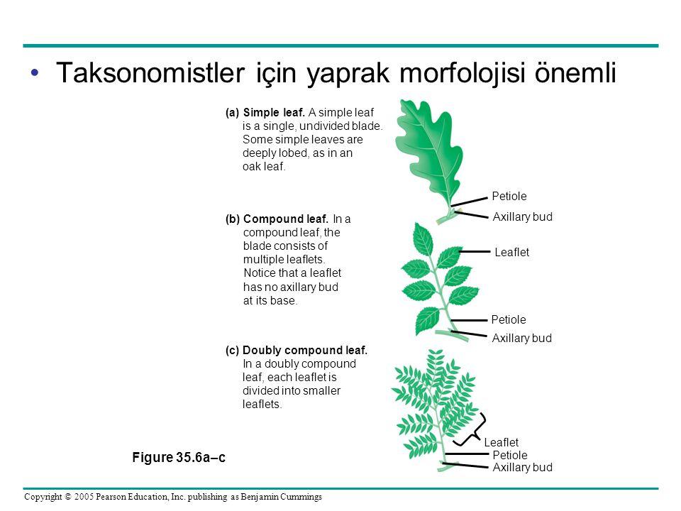 Taksonomistler için yaprak morfolojisi önemli