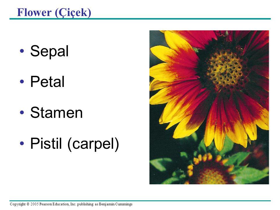 Flower (Çiçek) Sepal Petal Stamen Pistil (carpel)