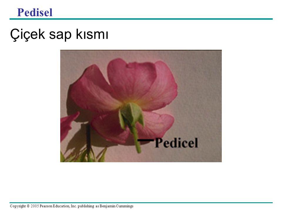 Pedisel Çiçek sap kısmı