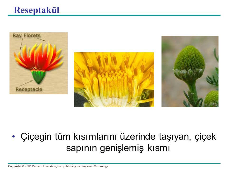 Reseptakül Çiçegin tüm kısımlarını üzerinde taşıyan, çiçek sapının genişlemiş kısmı