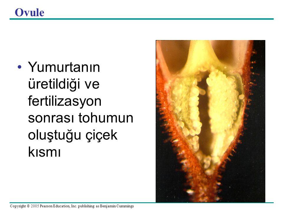 Ovule Yumurtanın üretildiği ve fertilizasyon sonrası tohumun oluştuğu çiçek kısmı