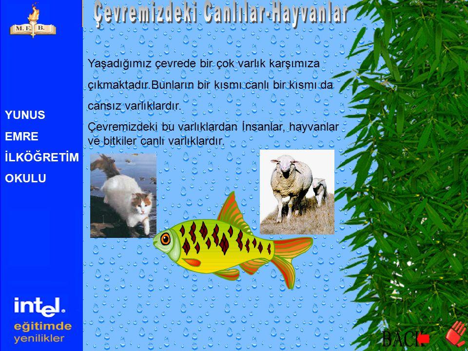 Çevremizdeki Canlılar-Hayvanlar