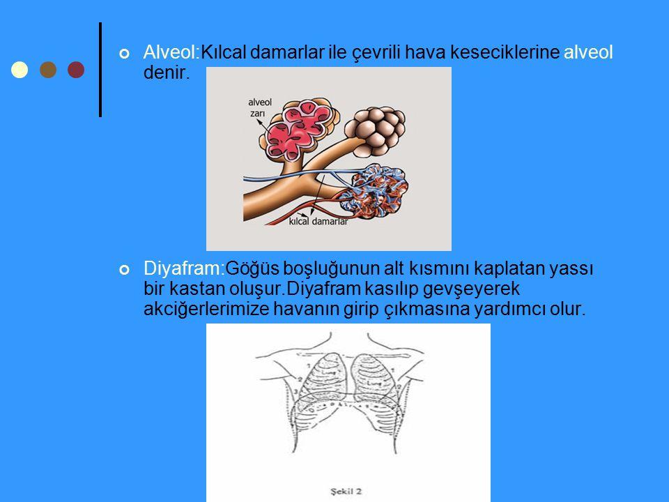 Alveol:Kılcal damarlar ile çevrili hava keseciklerine alveol denir.