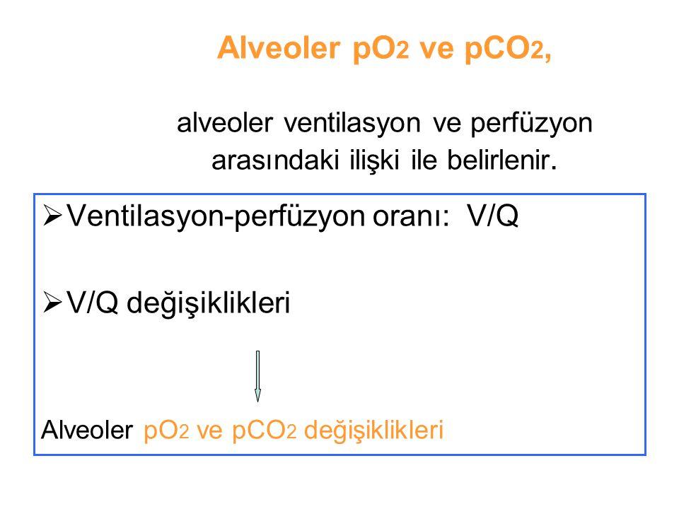 Alveoler pO2 ve pCO2, alveoler ventilasyon ve perfüzyon arasındaki ilişki ile belirlenir.