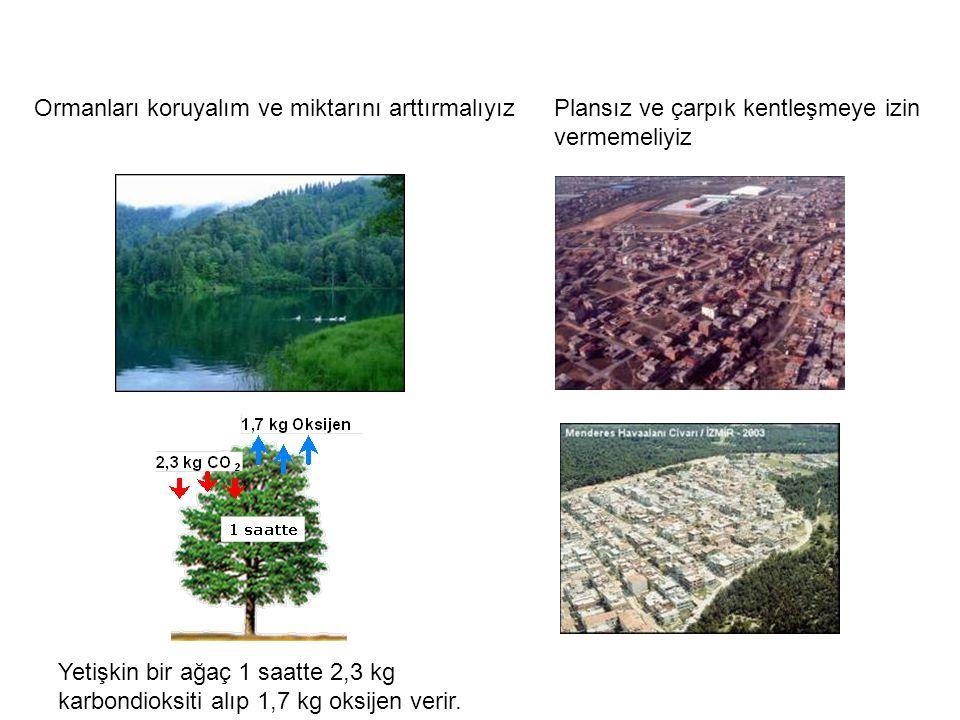 Ormanları koruyalım ve miktarını arttırmalıyız
