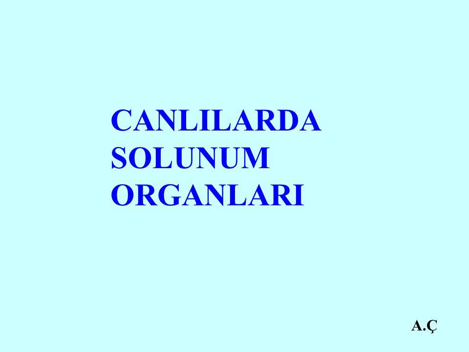 CANLILARDA SOLUNUM ORGANLARI